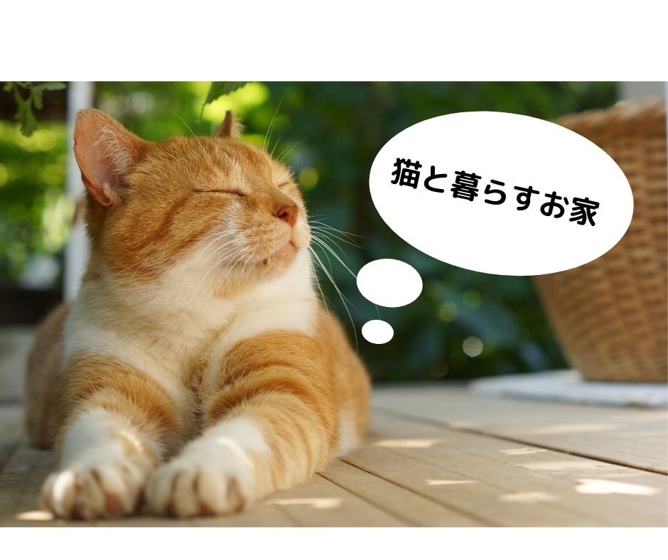 【新築一戸建】ペット暮らす家~猫編~【住宅、高知市、南国市、いの町、香美市、香南市、土佐市】